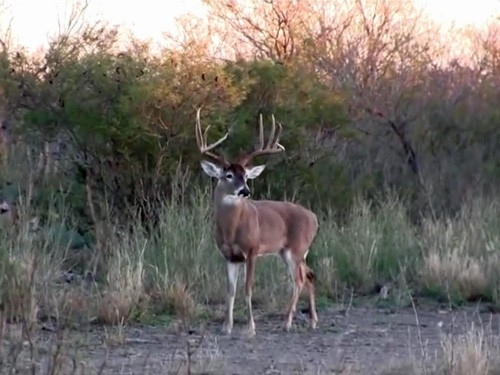 What Is a Low Fence or Fair Chase Whitetail Hunt?